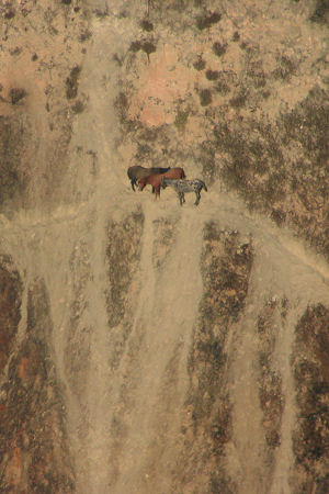 Horses trapped on cliff on the Buiberson Fire